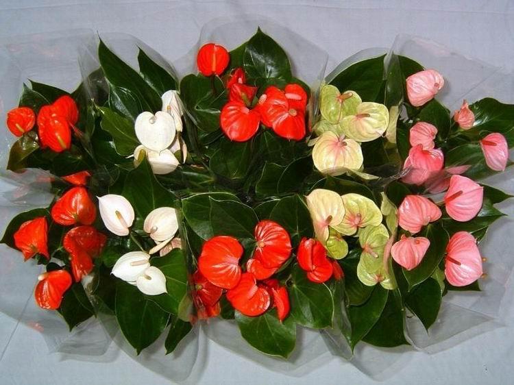 Цветок любви женское счастье
