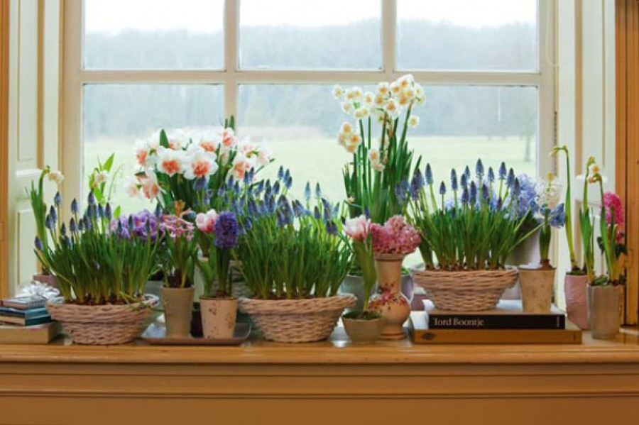 Фото цветы на подоконнике в горшках
