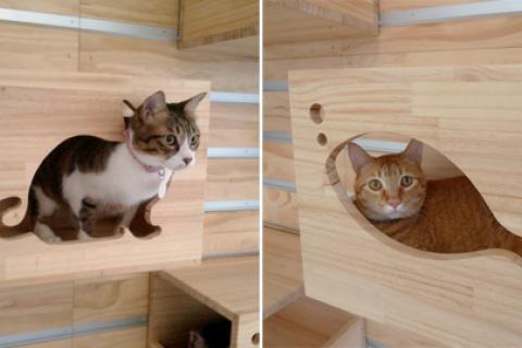 коты в деревянных конструкциях