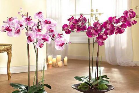 две орхидеи в интерьере