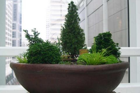 композиция с хвойными растениями
