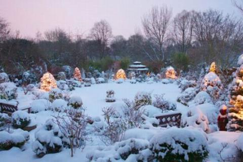 Хвойный сад зимой