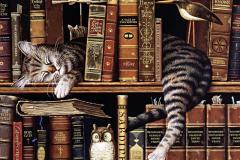 кот спит на книжной полке